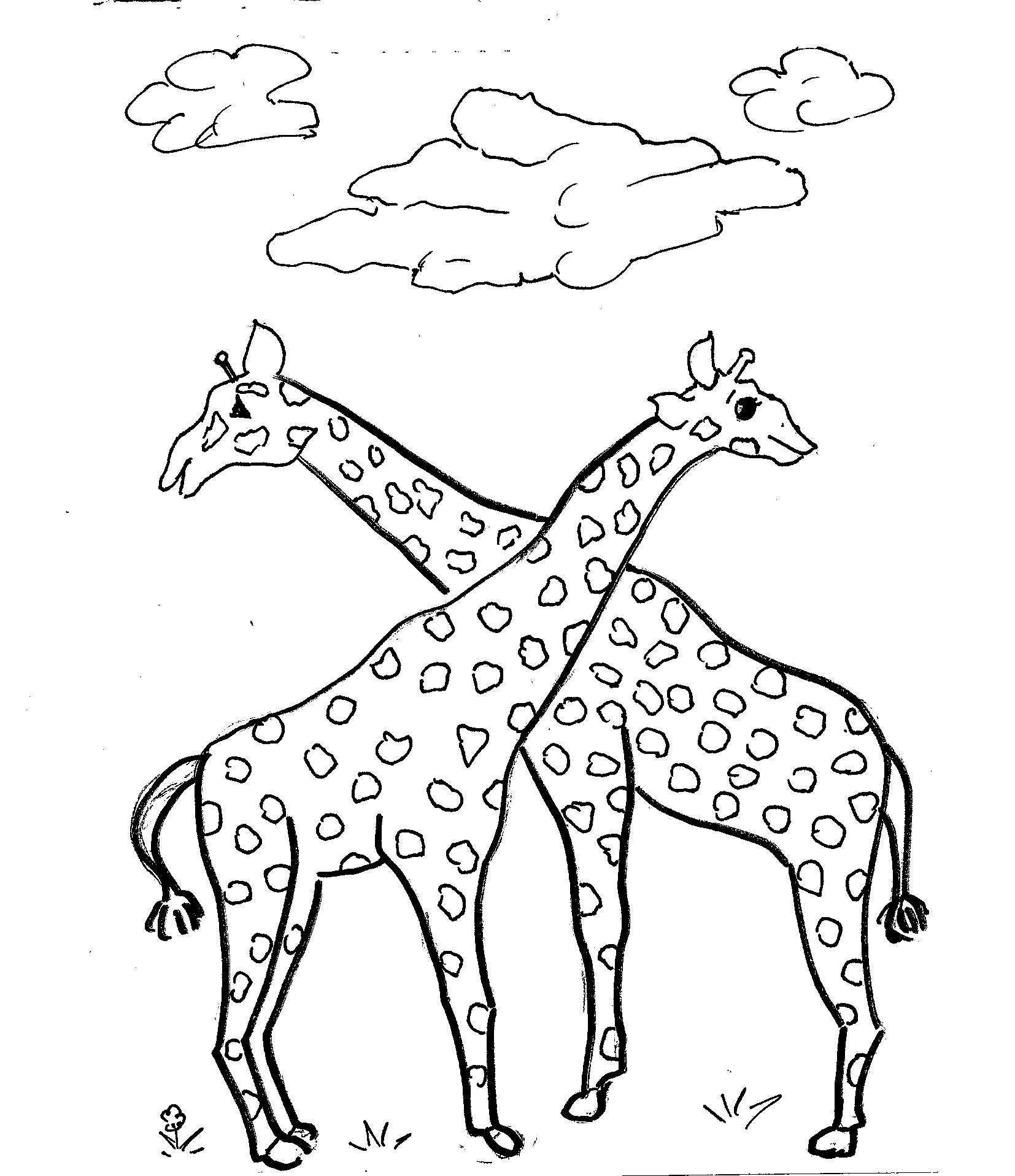 Disegni Da Colorare Bambini I Giraffe