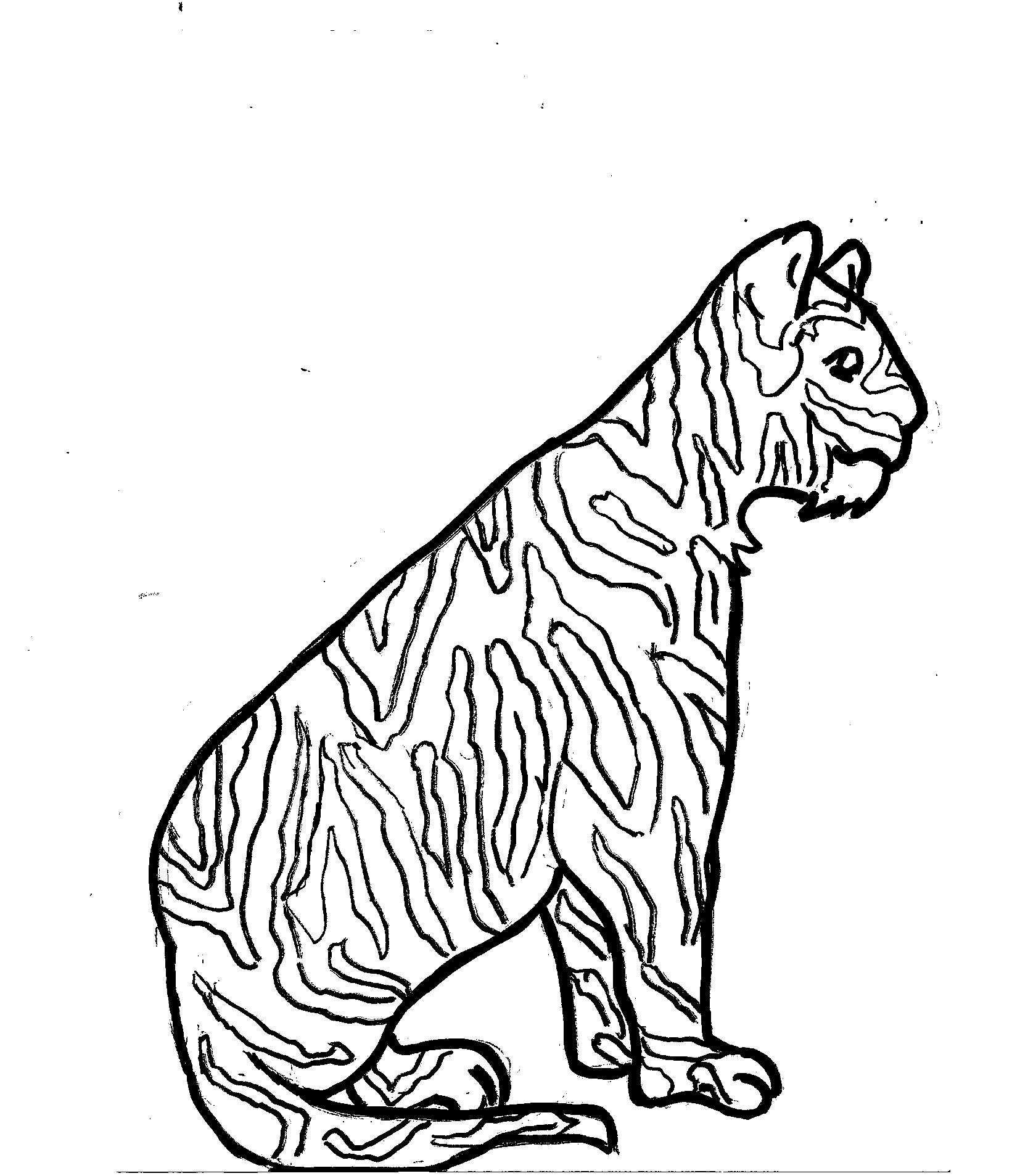 Disegni Da Colorare Bambini I Tigre